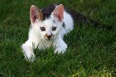 Little kitten lying on the grass — Stock Photo