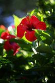 Big, bright flower — Stock Photo