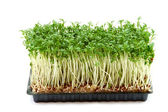 Fresh cress — Stock Photo