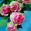 Pink roses — Stock Photo #1656595