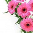 Pink gerber daisies bouquet — Stock Photo