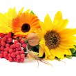 Sunflowers and ashberry — Stock Photo