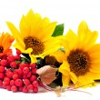 Stock Photo: Sunflowers and ashberry
