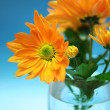 Orange chrysanthemum on blue background — Stock Photo #1657331
