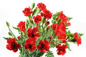 Red carnation bouquet — Stock Photo