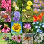 fjäril och blomma — Stockfoto