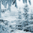 Pine trees with snow (in blue toned) — Stock Photo