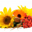 Stock Photo: Ash-berry and flowers still-life
