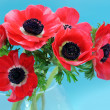 Royalty-Free Stock Photo: Anemone bouquet on blue background