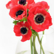 Anemone bouquet in vase — Stock Photo