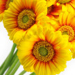 Yellow gerber bouquet — Stock Photo