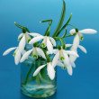 Snowdrops bouquet — Stock Photo #2618627