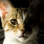 Young cat portrait — Stock Photo