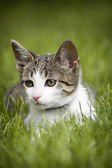 Cute cat in the grass — Stock Photo