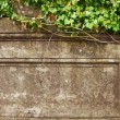 Stock Photo: Grunge frame. Ivy over old wall