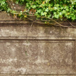 Grunge frame. Ivy over old wall — Stock Photo