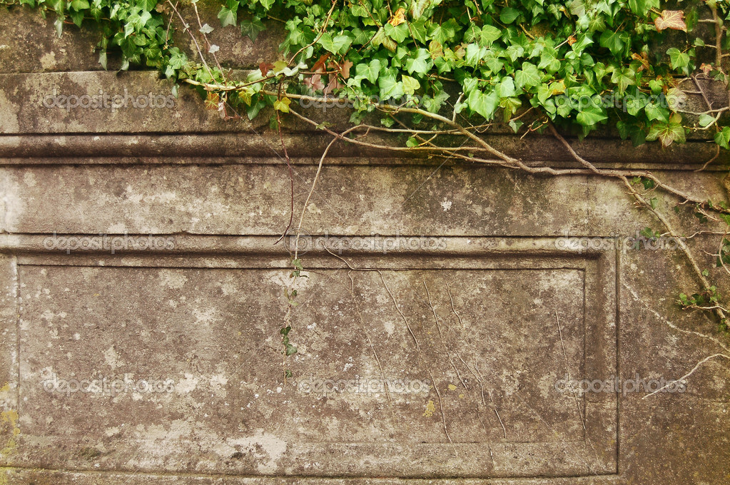 Green ivy over old wall. Grunge frame — Stock Photo #1721659