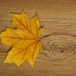 Autumn leaf over old board — Stock Photo #1854974
