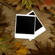 Polaroid frames over autumn background — Stock Photo