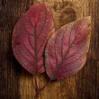 Royalty-Free Stock Photo: Autumn leaf over old board