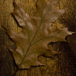 Autumn leaf over old board - Stock Photo
