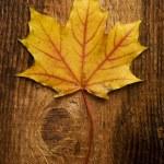 Autumn leaf over old board — Stock Photo