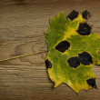 Autumn leaf over old board — Stock Photo #1856166