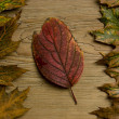 Autumn leaf over old board — Stock Photo #1856174