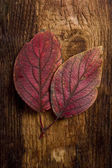 Autumn leaf over old board — Stock Photo