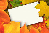 Balnk autumn card — Stock Photo