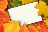 Balnk autumn card — 图库照片