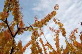 Blätter im herbst — Stockfoto