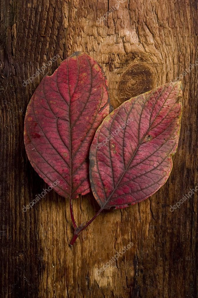 Single autumn leaf over old knaggy board. — Stock Photo #1855841