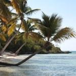 Beautiful Caribbean beach — Stock Photo #1650902