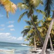 Stock Photo: Coconut Palm trees on CaribbeBeac