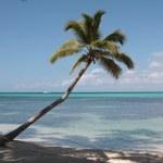 Beautiful Caribbean beach — Stock Photo #1650938