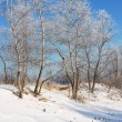 Winter landscape — Stock Photo #1772501