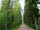 Wood road on island Valaam — Stock Photo