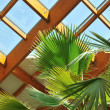 Royalty-Free Stock Photo: Palm and wooden roof construction