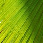 Palm background — Stock Photo