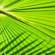Palm background — Stock Photo