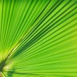 Royalty-Free Stock Photo: Palm background