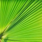 Palm background — Stock Photo #1679142
