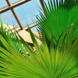 Palm and wooden roof construction — Stock Photo #1679280
