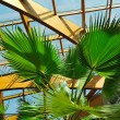 Palm and wooden roof construction — Stock Photo #1679294