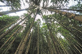 Forest trees with wide angle lens — Stock Photo