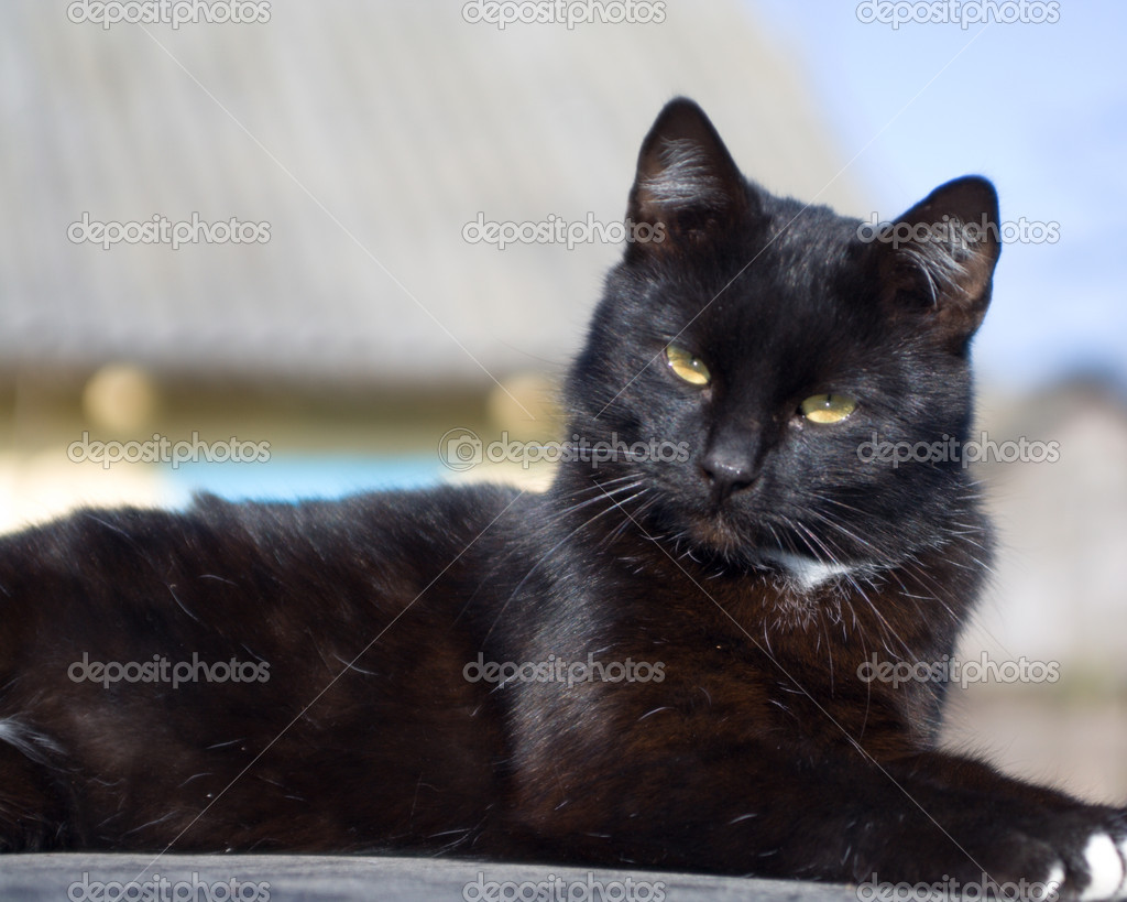 Black cat lie and see with question — Stock Photo #1648449