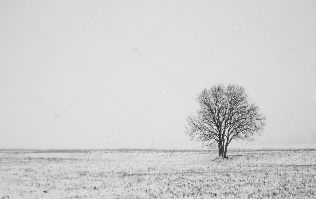 Winter landscape with lonely tree in field — Stock Photo #1650805