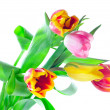 Royalty-Free Stock Photo: Bunch of tulips