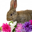 Bunny and flowers — Stock Photo